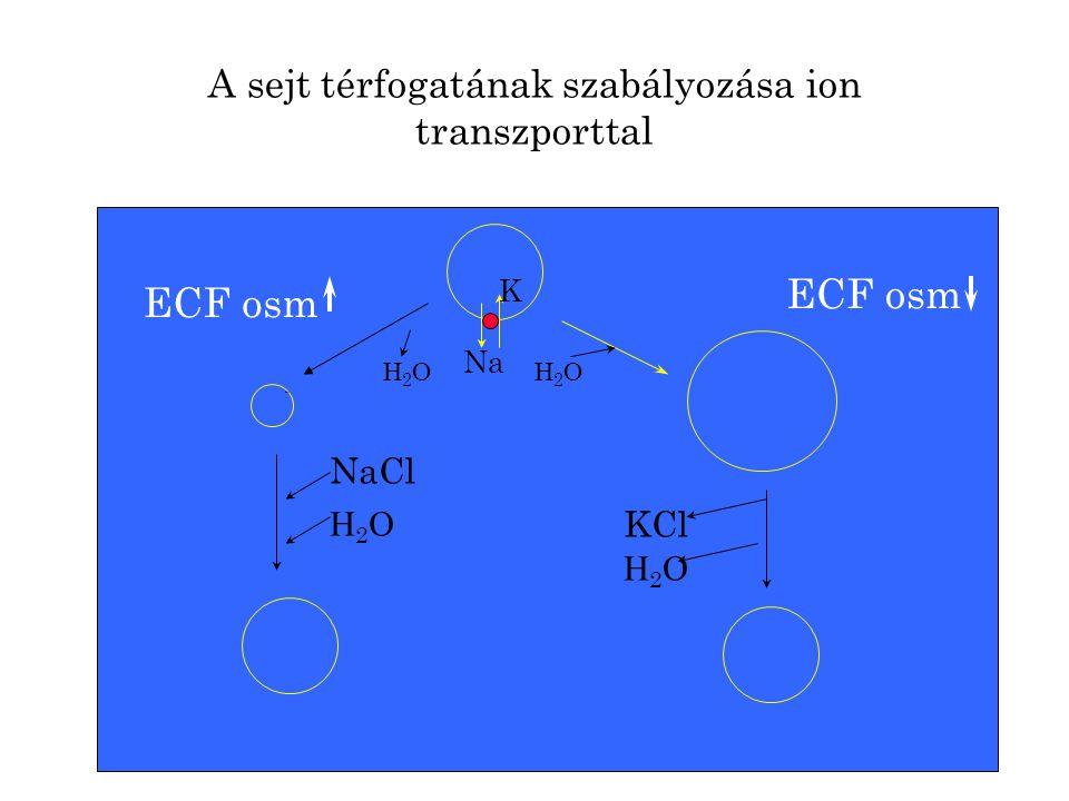 A sejt térfogatának szabályozása ion transzporttal Na K NaCl H2OH2O KCl H2OH2O H2OH2O H2OH2O ECF osm