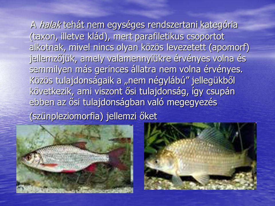 A halak tehát nem egységes rendszertani kategória (taxon, illetve klád), mert parafiletikus csoportot alkotnak, mivel nincs olyan közös levezetett (ap