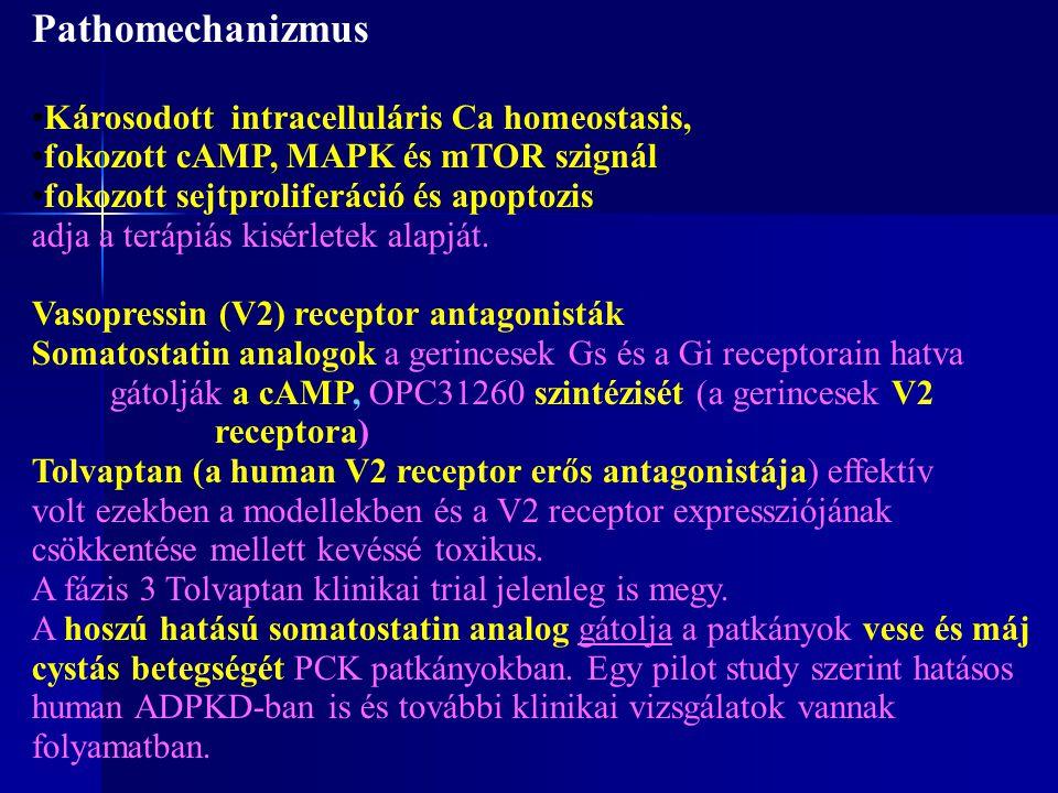 Pathomechanizmus Károsodott intracelluláris Ca homeostasis, fokozott cAMP, MAPK és mTOR szignál fokozott sejtproliferáció és apoptozis adja a terápiás