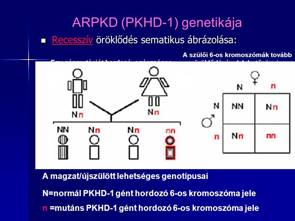 ARPKD (PKHD-1) genetikája Recesszív öröklődés sematikus ábrázolása: Recesszív öröklődés sematikus ábrázolása: Egy génmutációt hordozó, egészséges apaa