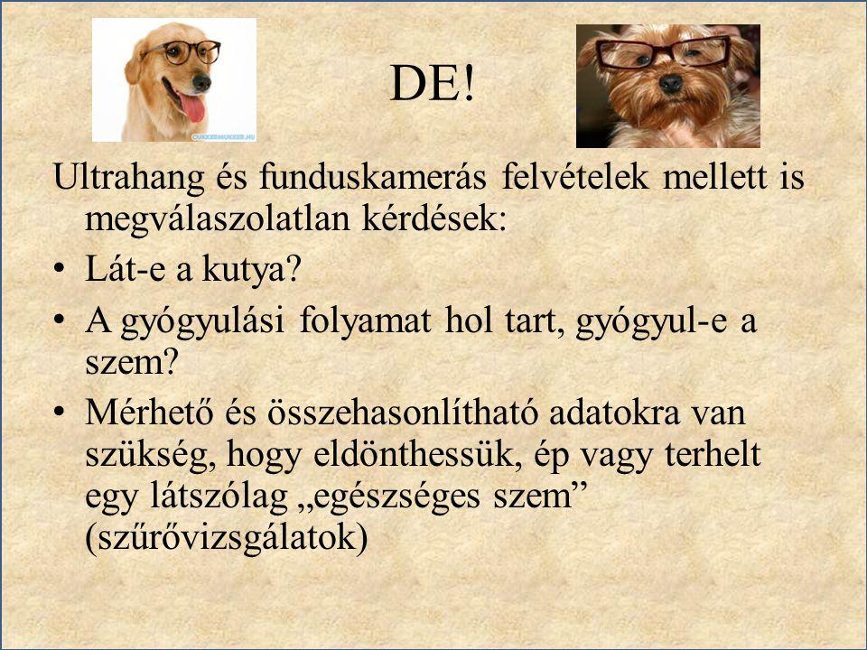 DE! Ultrahang és funduskamerás felvételek mellett is megválaszolatlan kérdések: Lát-e a kutya? A gyógyulási folyamat hol tart, gyógyul-e a szem? Mérhe