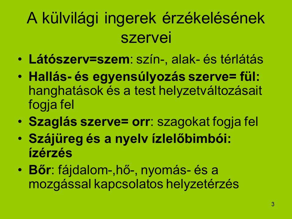 3 A külvilági ingerek érzékelésének szervei Látószerv=szem: szín-, alak- és térlátás Hallás- és egyensúlyozás szerve= fül: hanghatások és a test helyz