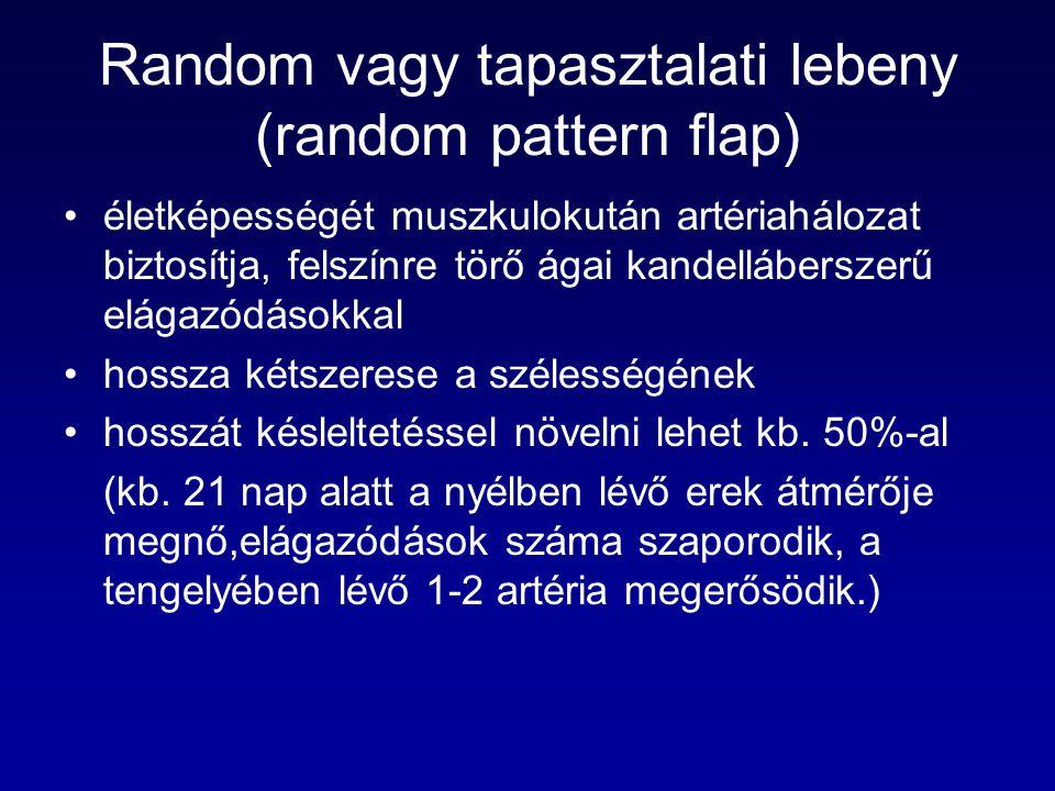 Random vagy tapasztalati lebeny (random pattern flap) életképességét muszkulokután artériahálozat biztosítja, felszínre törő ágai kandelláberszerű elá