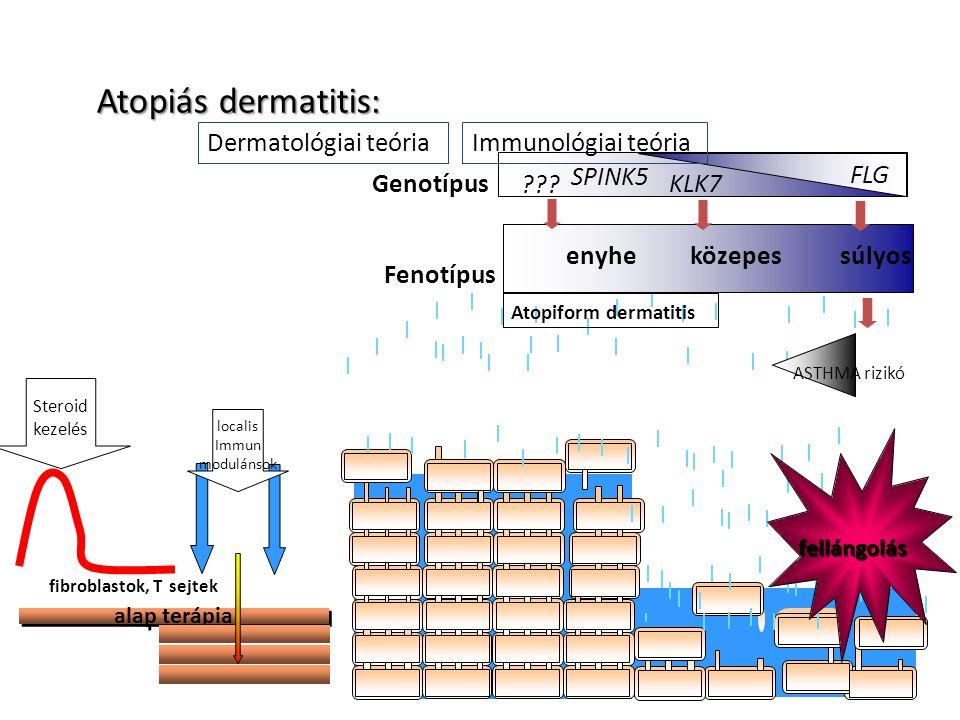 fellángolás Fenotípus enyheközepessúlyos Atopiform dermatitis ASTHMA rizikó Genotípus FLG SPINK5 KLK7 ??? Dermatológiai teóriaImmunológiai teória fibr