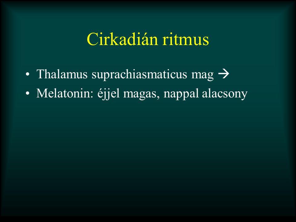 Cirkadián ritmus Thalamus suprachiasmaticus mag  Melatonin: éjjel magas, nappal alacsony