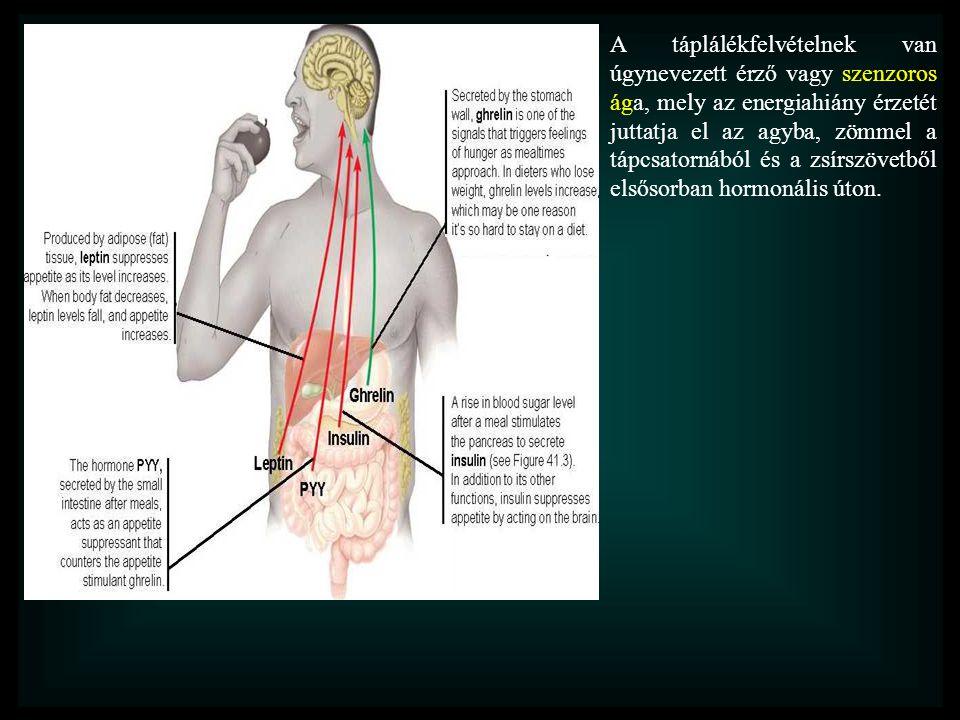 A táplálékfelvételnek van úgynevezett érző vagy szenzoros ága, mely az energiahiány érzetét juttatja el az agyba, zömmel a tápcsatornából és a zsírszö