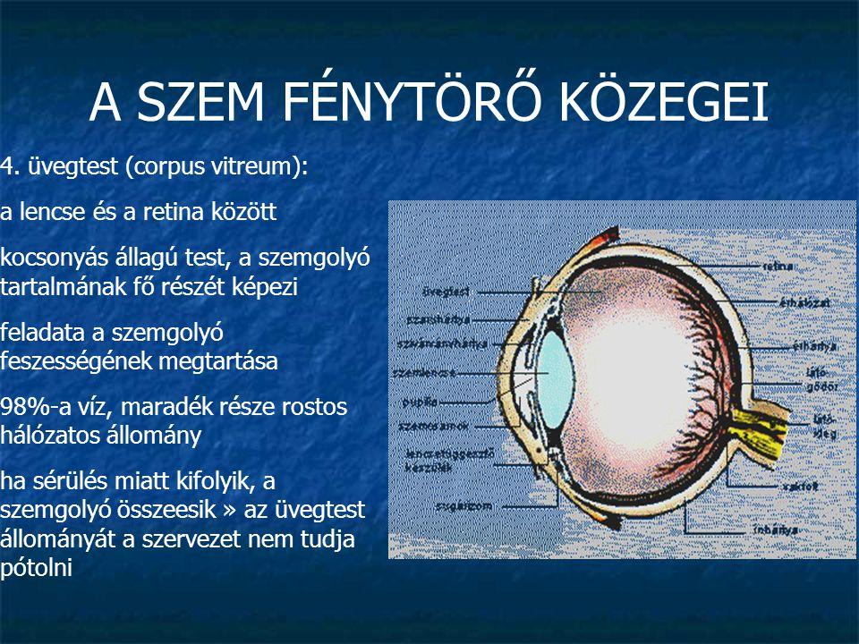A SZEM FÉNYTÖRŐ KÖZEGEI 4. üvegtest (corpus vitreum): a lencse és a retina között kocsonyás állagú test, a szemgolyó tartalmának fő részét képezi fela