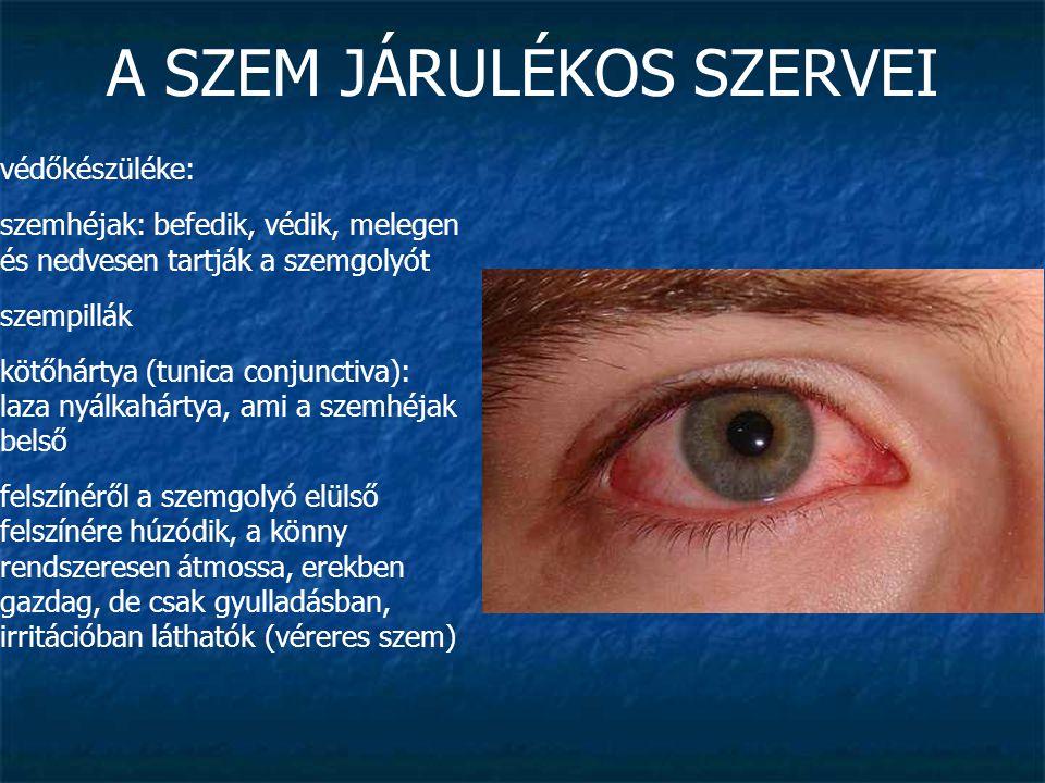 A SZEM JÁRULÉKOS SZERVEI védőkészüléke: szemhéjak: befedik, védik, melegen és nedvesen tartják a szemgolyót szempillák kötőhártya (tunica conjunctiva)