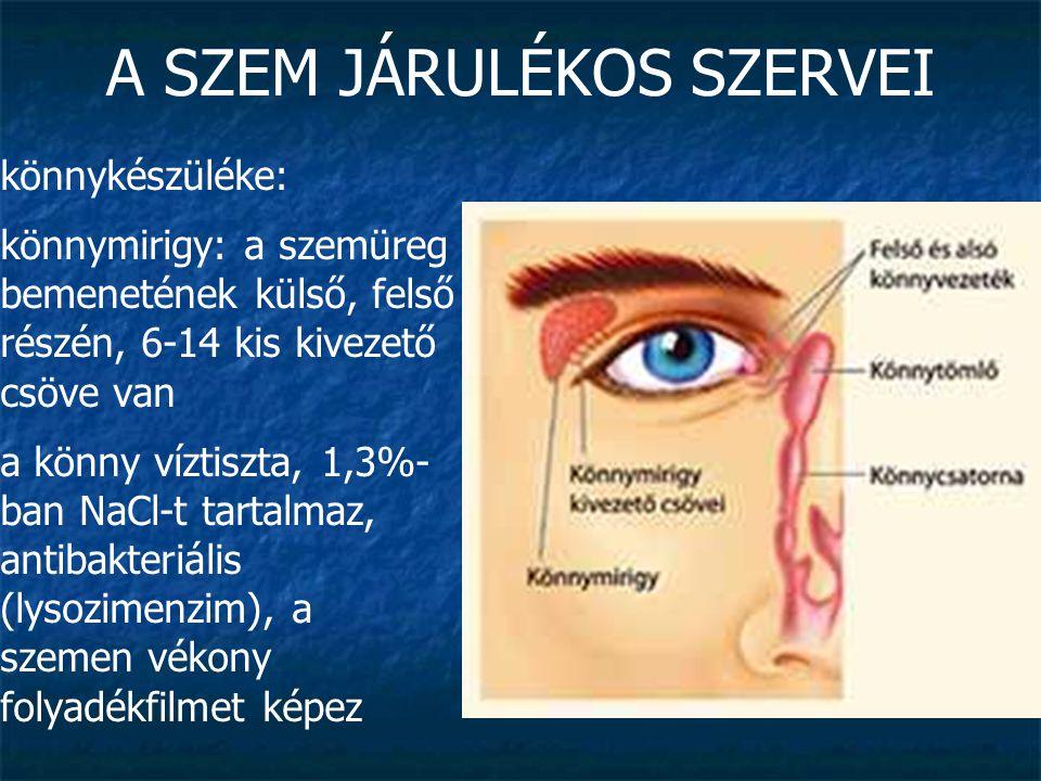 A SZEM JÁRULÉKOS SZERVEI könnykészüléke: könnymirigy: a szemüreg bemenetének külső, felső részén, 6-14 kis kivezető csöve van a könny víztiszta, 1,3%-