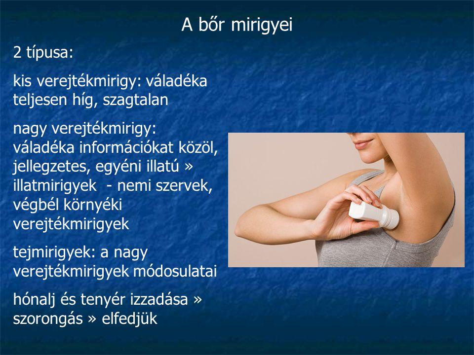 A bőr mirigyei 2 típusa: kis verejtékmirigy: váladéka teljesen híg, szagtalan nagy verejtékmirigy: váladéka információkat közöl, jellegzetes, egyéni i
