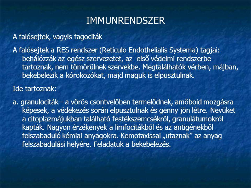 IMMUNRENDSZER A falósejtek, vagyis fagociták A falósejtek a RES rendszer (Reticulo Endothelialis Systema) tagjai: behálózzák az egész szervezetet, az