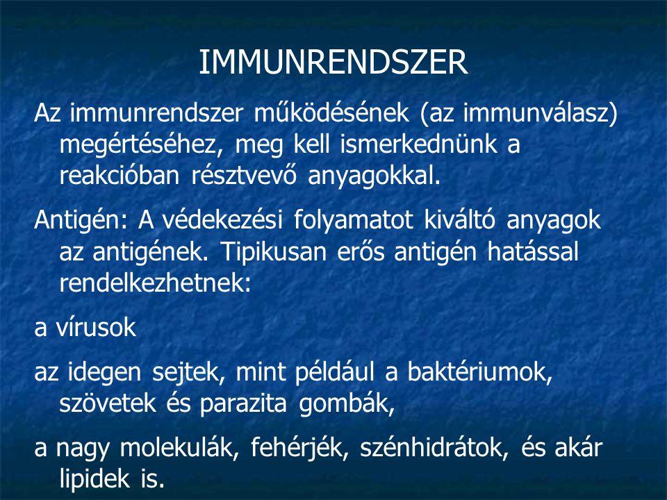 IMMUNRENDSZER Az immunrendszer működésének (az immunválasz) megértéséhez, meg kell ismerkednünk a reakcióban résztvevő anyagokkal. Antigén: A védekezé