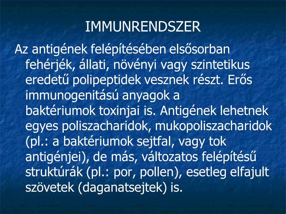IMMUNRENDSZER Az immunaktív szervezet számára három antigéncsoportot különböztetünk meg: Autoantigén: mindazok az anyagok, amelyek egyébként a szervezet saját testanyagai, de amelyeket kóros körülmények között az immunrendszer idegenként regisztrál, és ellenük ellenanyagképzést indít meg.
