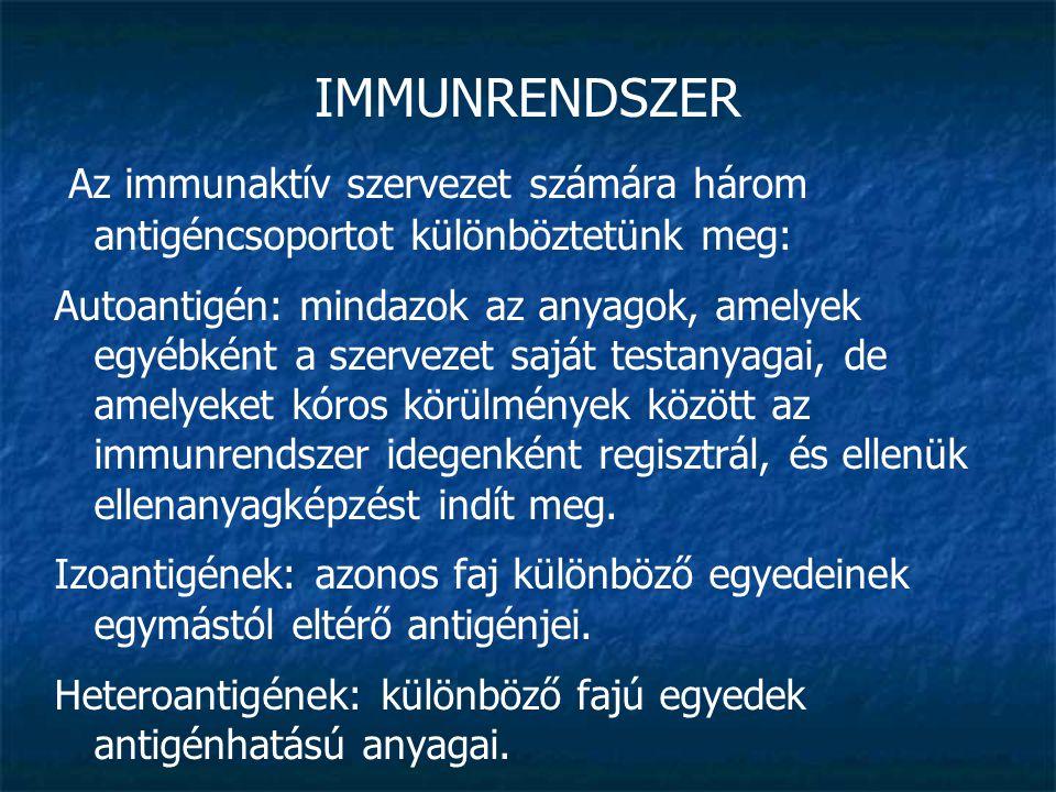 IMMUNRENDSZER Az immunaktív szervezet számára három antigéncsoportot különböztetünk meg: Autoantigén: mindazok az anyagok, amelyek egyébként a szervez