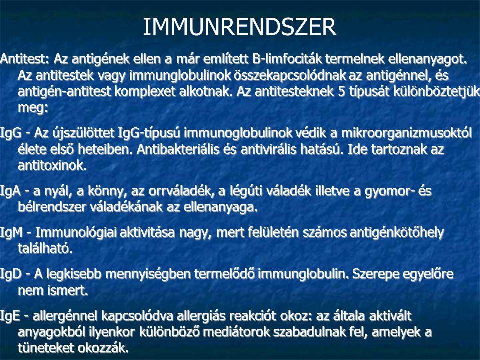 IMMUNRENDSZER Antitest: Az antigének ellen a már említett B-limfociták termelnek ellenanyagot. Az antitestek vagy immunglobulinok összekapcsolódnak az