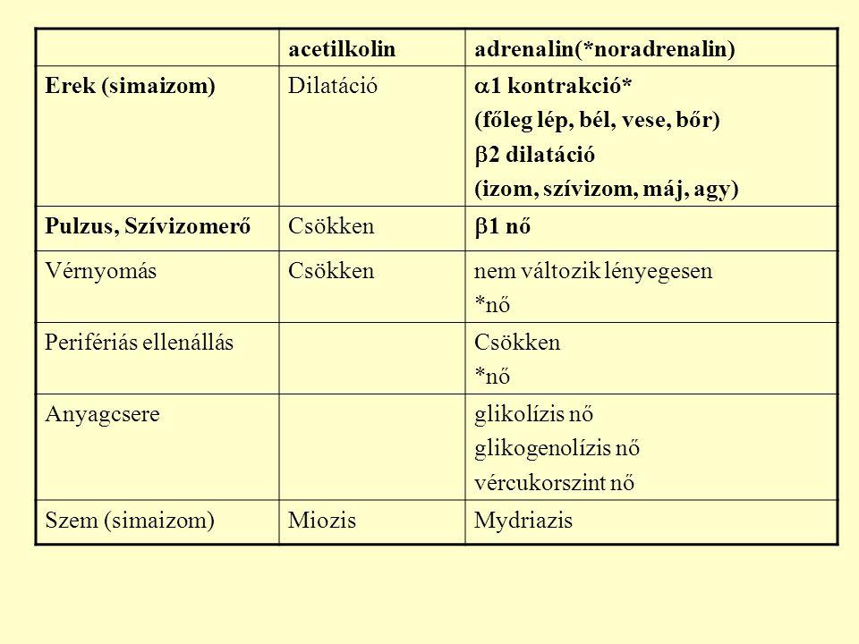 acetilkolinadrenalin(*noradrenalin) Erek (simaizom)Dilatáció  1 kontrakció* (főleg lép, bél, vese, bőr)  2 dilatáció (izom, szívizom, máj, agy) Pulz