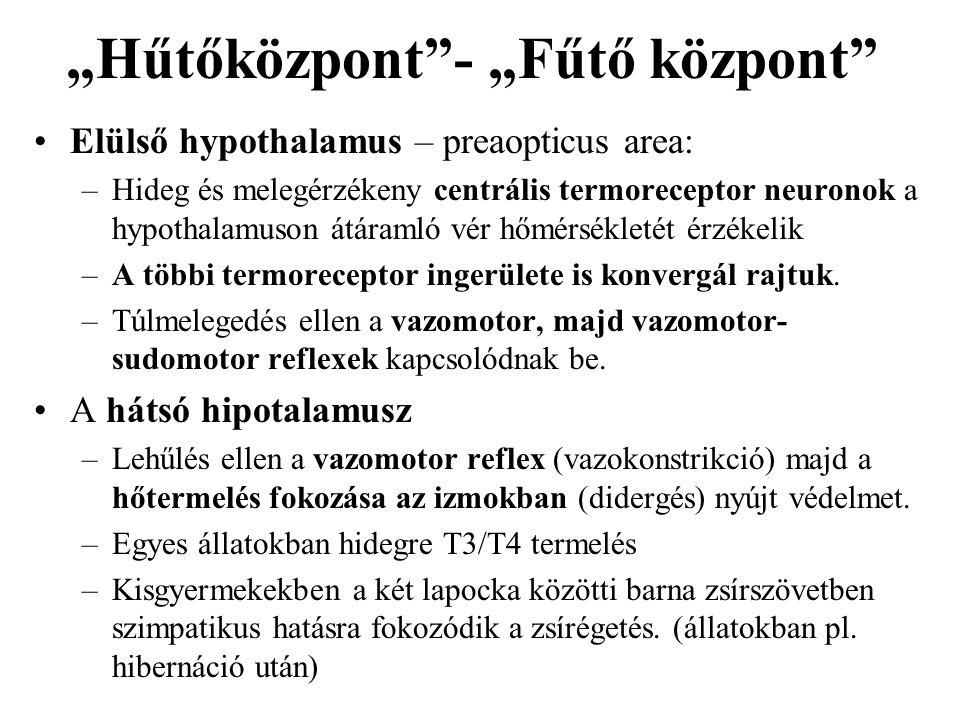 """""""Hűtőközpont""""- """"Fűtő központ"""" Elülső hypothalamus – preaopticus area: –Hideg és melegérzékeny centrális termoreceptor neuronok a hypothalamuson átáram"""