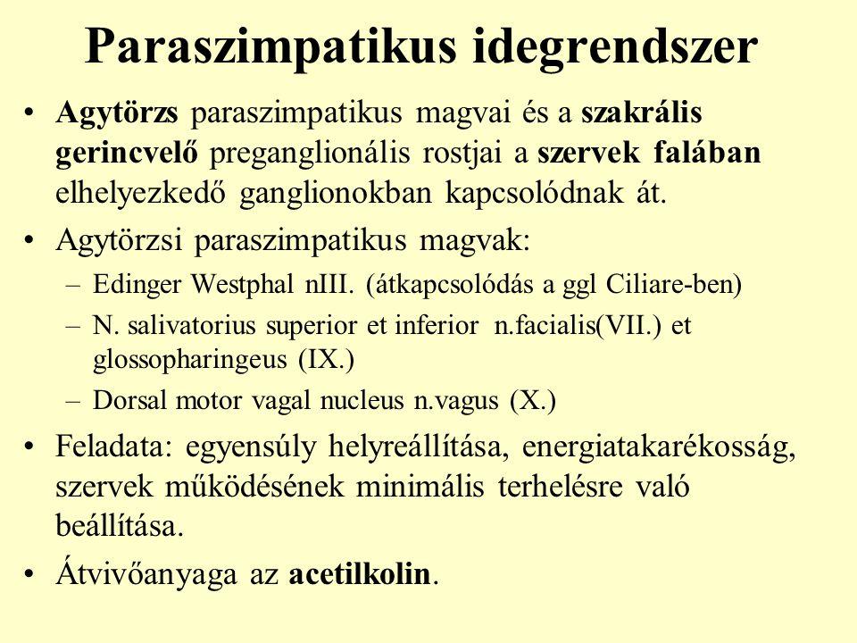 Paraszimpatikus idegrendszer Agytörzs paraszimpatikus magvai és a szakrális gerincvelő preganglionális rostjai a szervek falában elhelyezkedő ganglion