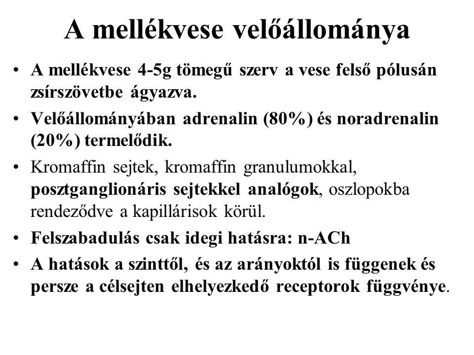 A mellékvese velőállománya A mellékvese 4-5g tömegű szerv a vese felső pólusán zsírszövetbe ágyazva. Velőállományában adrenalin (80%) és noradrenalin