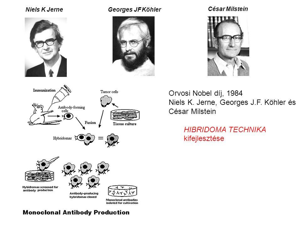 Niels K JerneGeorges JF Köhler César Milstein Orvosi Nobel díj, 1984 Niels K. Jerne, Georges J.F. Köhler és César Milstein HIBRIDOMA TECHNIKA kifejles