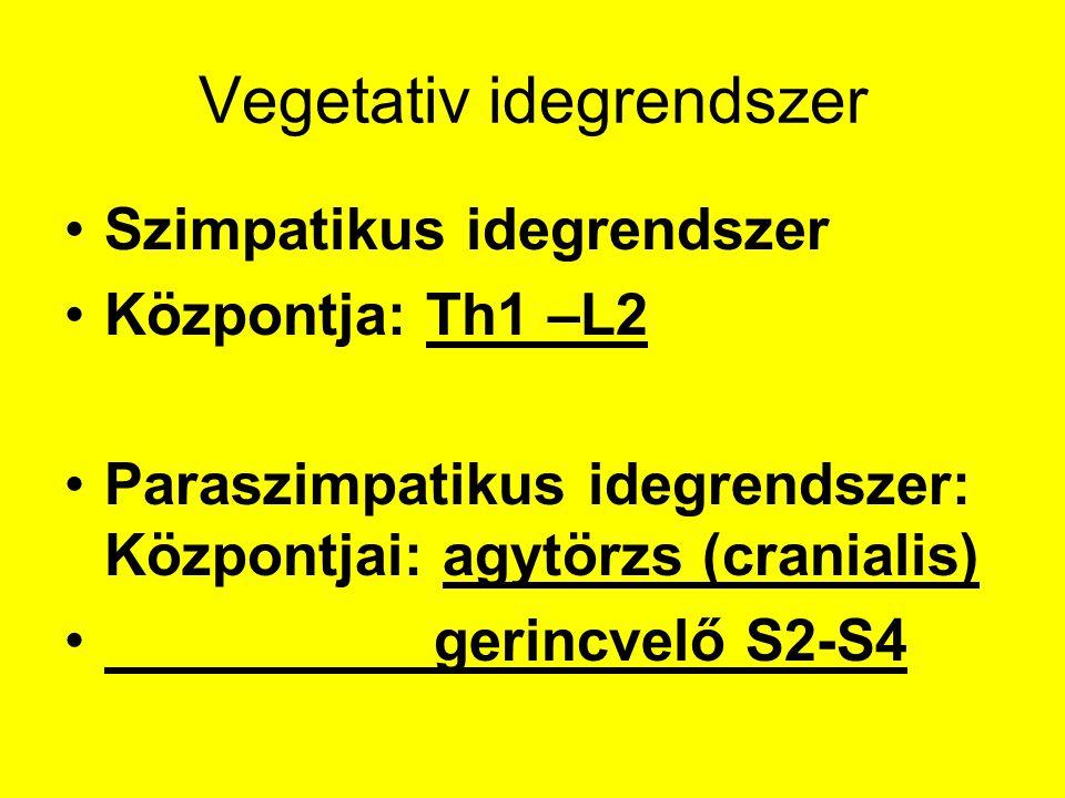 Vegetativ idegrendszer Szimpatikus idegrendszer Központja: Th1 –L2 Paraszimpatikus idegrendszer: Központjai: agytörzs (cranialis) gerincvelő S2-S4
