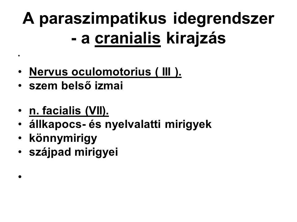 A paraszimpatikus idegrendszer - a cranialis kirajzás Nervus oculomotorius ( III ). szem belső izmai n. facialis (VII). állkapocs- és nyelvalatti miri