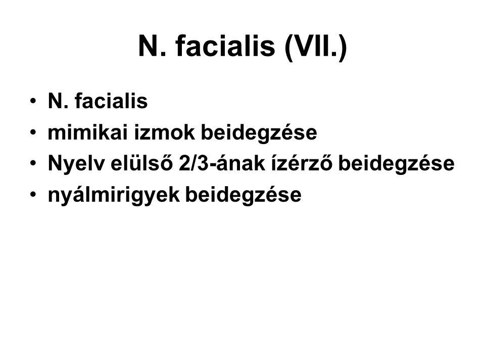 N. facialis (VII.) N. facialis mimikai izmok beidegzése Nyelv elülső 2/3-ának ízérző beidegzése nyálmirigyek beidegzése