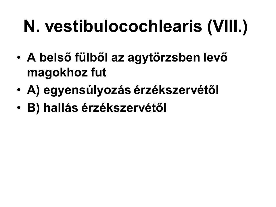 N. vestibulocochlearis (VIII.) A belső fülből az agytörzsben levő magokhoz fut A) egyensúlyozás érzékszervétől B) hallás érzékszervétől