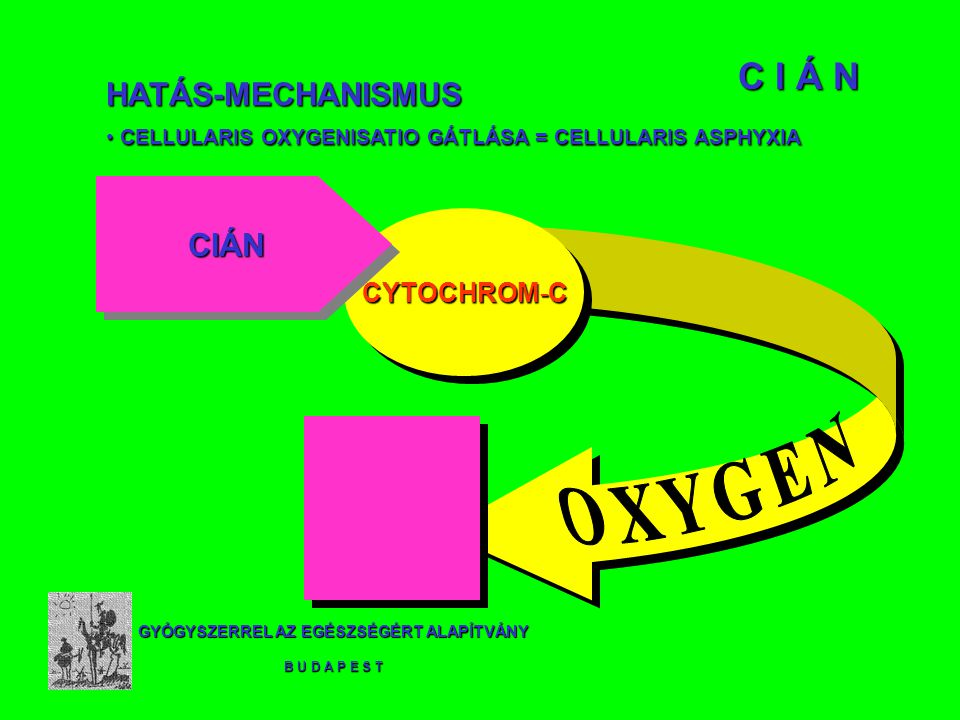 GYÓGYSZERREL AZ EGÉSZSÉGÉRT ALAPÍTVÁNY B U D A P E S T C I Á N CYTOCHROM-C CIÁNCIÁN HATÁS-MECHANISMUS CELLULARIS OXYGENISATIO GÁTLÁSA = CELLULARIS ASPHYXIA CELLULARIS OXYGENISATIO GÁTLÁSA = CELLULARIS ASPHYXIA