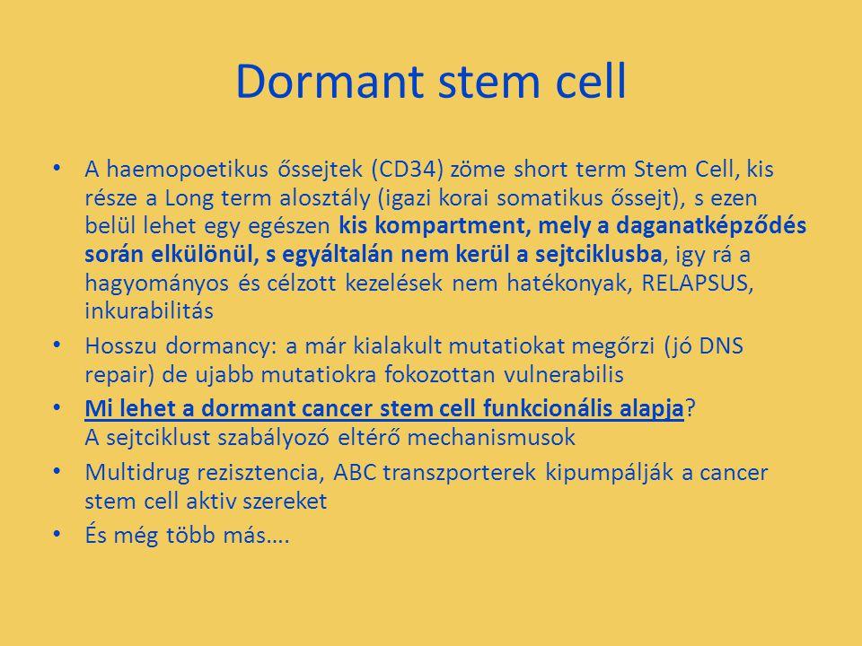Dormant stem cell A haemopoetikus őssejtek (CD34) zöme short term Stem Cell, kis része a Long term alosztály (igazi korai somatikus őssejt), s ezen belül lehet egy egészen kis kompartment, mely a daganatképződés során elkülönül, s egyáltalán nem kerül a sejtciklusba, igy rá a hagyományos és célzott kezelések nem hatékonyak, RELAPSUS, inkurabilitás Hosszu dormancy: a már kialakult mutatiokat megőrzi (jó DNS repair) de ujabb mutatiokra fokozottan vulnerabilis Mi lehet a dormant cancer stem cell funkcionális alapja.