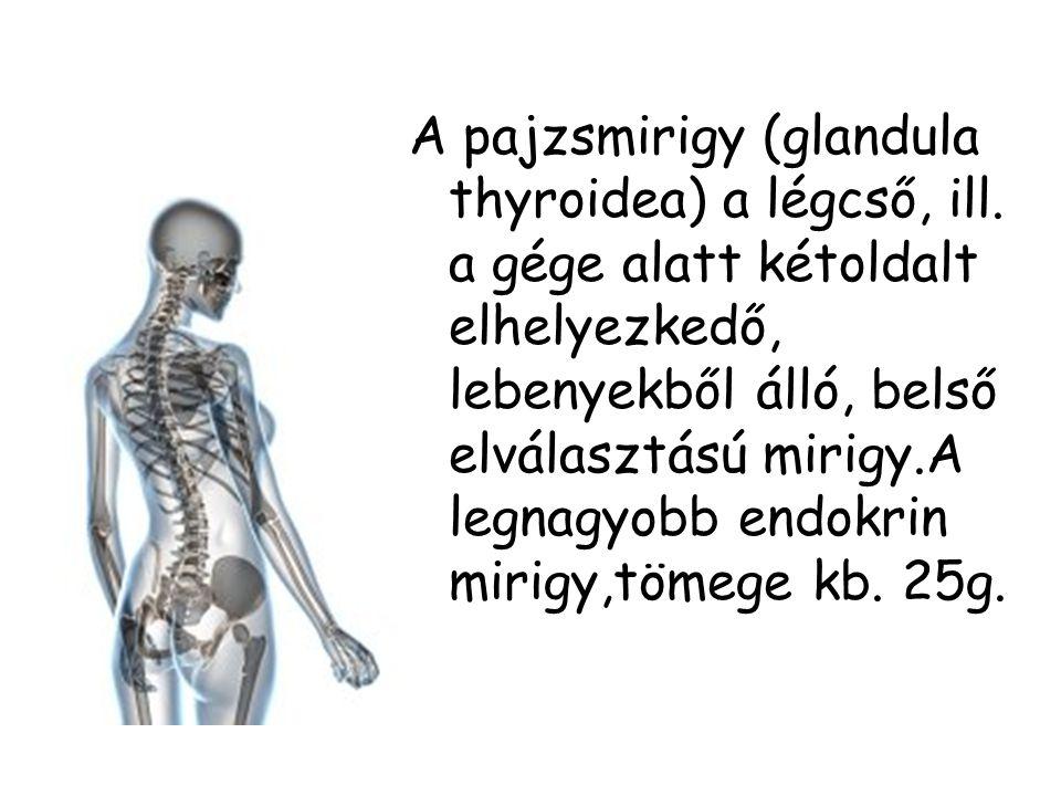 A pajzsmirigy (glandula thyroidea) a légcső, ill. a gége alatt kétoldalt elhelyezkedő, lebenyekből álló, belső elválasztású mirigy.A legnagyobb endokr