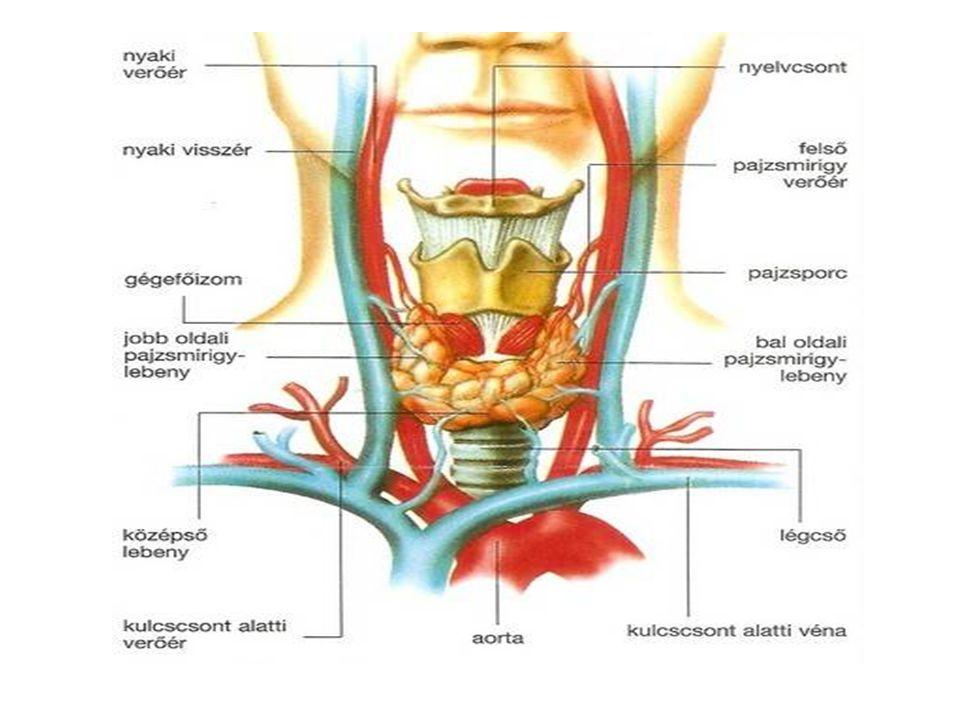 Kötőszövetes állományból(sztrómábó l)áll,melyben mirigyhámot tartalmazó tüszők találhatók.A tüszők hámsejtjei kolloidot termelnek,amelyben hormonok raktározódnak.A pajzsmirigykolloid tiroglobulint tartalmaz, amelynek fő alkotóeleme a tirozin nevű aminosav.