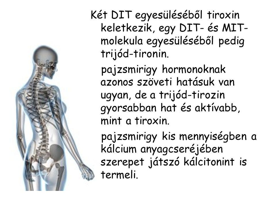 Két DIT egyesüléséből tiroxin keletkezik, egy DIT- és MIT- molekula egyesüléséből pedig trijód-tironin. A pajzsmirigy hormonoknak azonos szöveti hatás