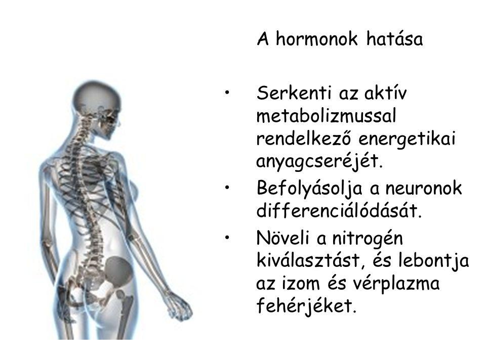 A hormonok hatása Serkenti az aktív metabolizmussal rendelkező energetikai anyagcseréjét. Befolyásolja a neuronok differenciálódását. Növeli a nitrogé
