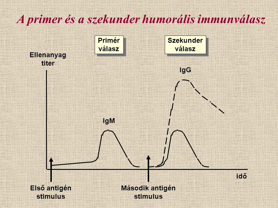 Primér válasz Primér válasz Szekunder válasz Szekunder válasz Ellenanyag titer Első antigén stimulus Második antigén stimulus idő IgM IgG A primer és