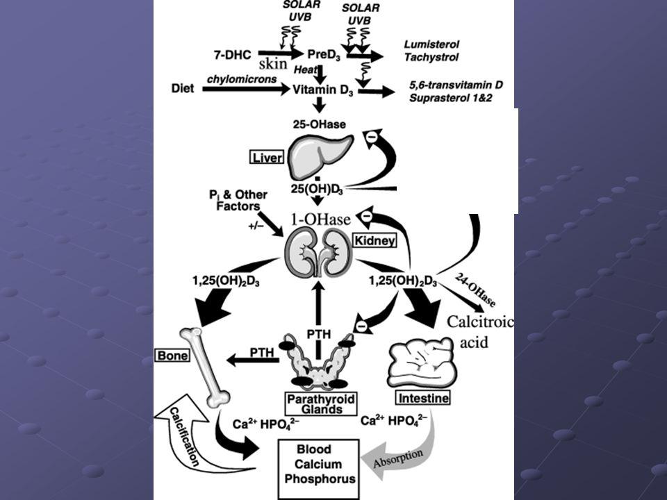 D-vitamin receptorok az egész szervezetben megtalálhatók Andress D.