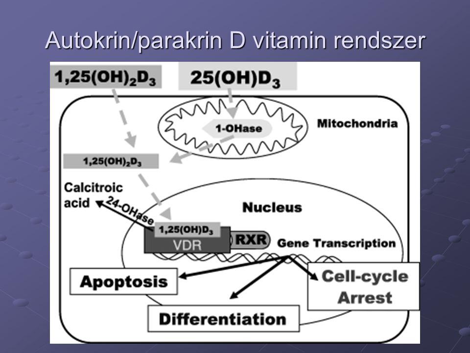 Lokális D vitamin rendszerek Mind a szisztémás 1,25(OH)2D3, mind a szisztémás 25(OH)D3 hatást vált ki A lokális 1,25(OH)d3 koncentráció magas Lokális 24-hydroxylase Relatíve magas 25(OH)D3 koncentráció igény Közvetlen 25(OH)D3 hatás a receptoron