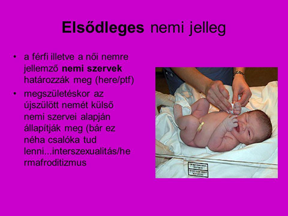 Elsődleges nemi jelleg a férfi illetve a női nemre jellemző nemi szervek határozzák meg (here/ptf) megszületéskor az újszülött nemét külső nemi szerve