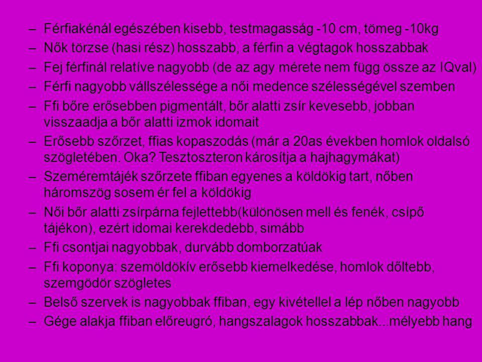 Ondóhólyag: (vesica seminalis) Páros szerv tömlőszerű, feladata a váladéktermelés a húgyhólyag hátsó, alsó részéhez rögzített → rectalis vizsgálattal tapintható belső felszínét nyálkahártya béleli → váladéktermelés kivezető csöve az ondóvezetékbe nyílik