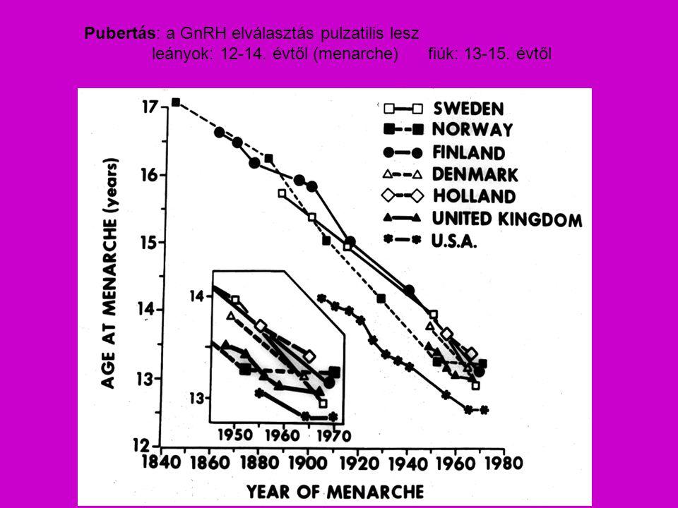 Pubertás: a GnRH elválasztás pulzatilis lesz leányok: 12-14. évtől (menarche) fiúk: 13-15. évtől