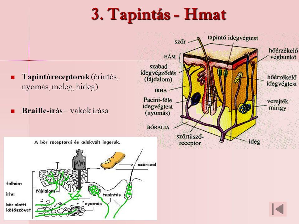 3. Tapintás - Hmat Tapintóreceptorok (érintés, nyomás, meleg, hideg) Braille-írás – vakok írása