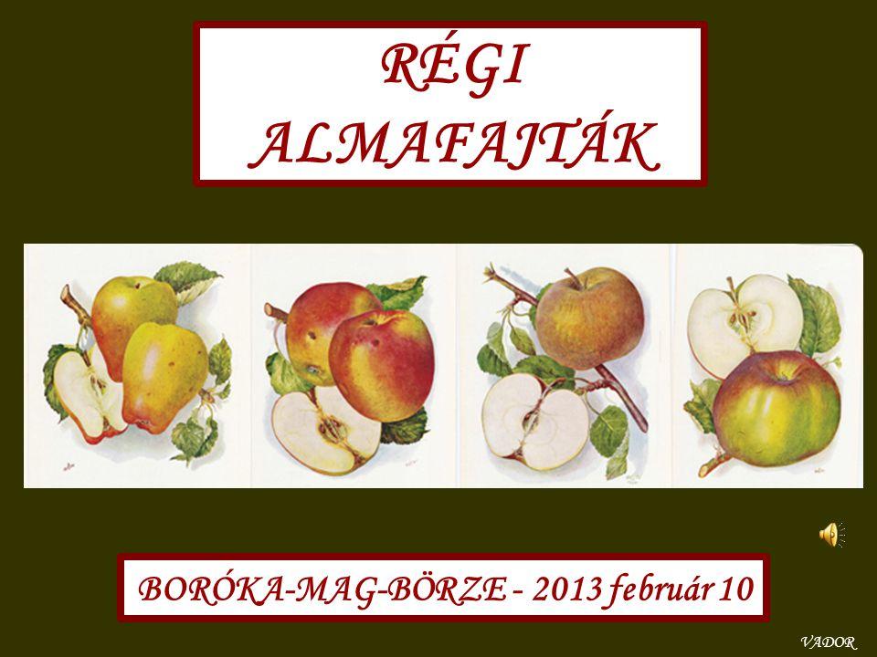 RÉGI ALMAFAJTÁK BORÓKA-MAG-BÖRZE - 2013 február 10 VADOR