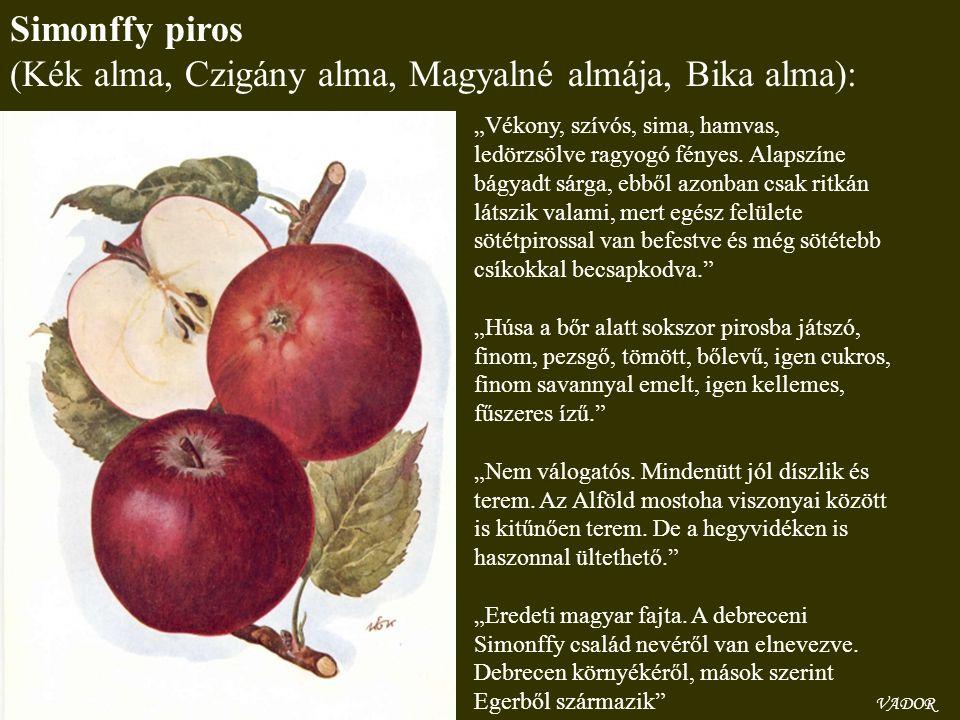 """VADOR Simonffy piros (Kék alma, Czigány alma, Magyalné almája, Bika alma): """"Vékony, szívós, sima, hamvas, ledörzsölve ragyogó fényes. Alapszíne bágyad"""