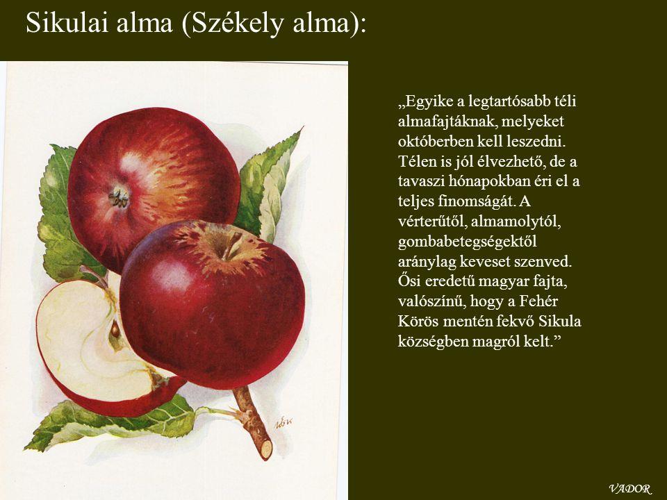 """VADOR Sikulai alma (Székely alma): """"Egyike a legtartósabb téli almafajtáknak, melyeket októberben kell leszedni. Télen is jól élvezhető, de a tavaszi"""