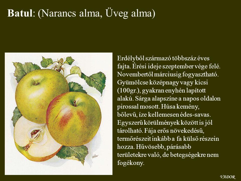 Batul: (Narancs alma, Üveg alma) Erdélyből származó többszáz éves fajta. Érési ideje szeptember vége felé. Novembertől márciusig fogyasztható. Gyümölc