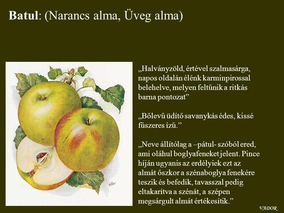 """VADOR Batul: (Narancs alma, Üveg alma) """"Halványzöld, értével szalmasárga, napos oldalán élénk karminpirossal belehelve, melyen feltűnik a ritkás barna"""