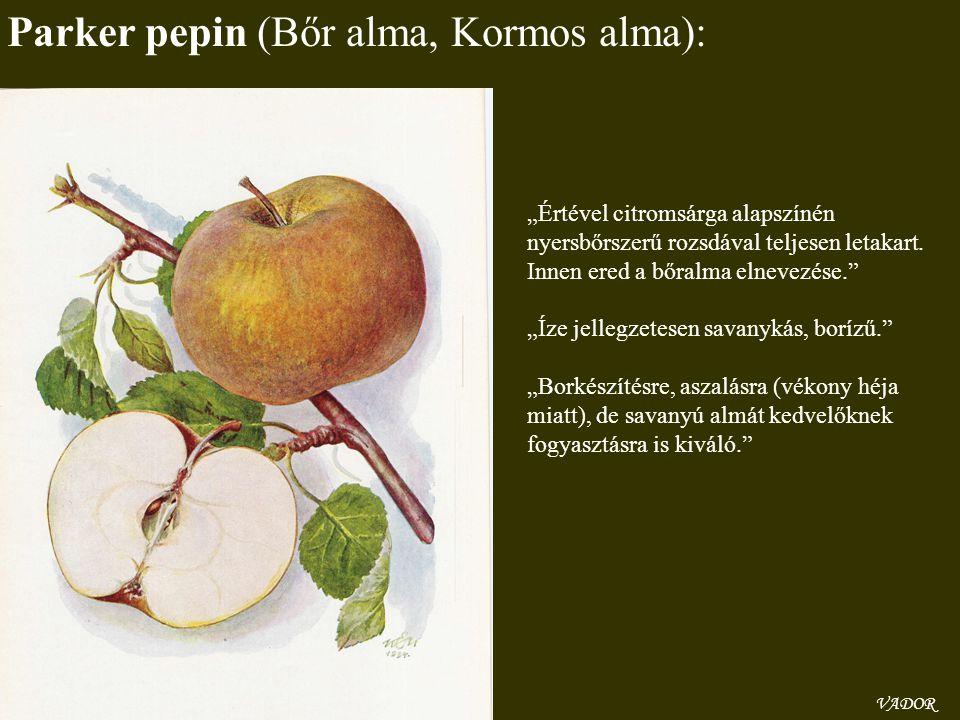 """VADOR Parker pepin (Bőr alma, Kormos alma): """"Értével citromsárga alapszínén nyersbőrszerű rozsdával teljesen letakart. Innen ered a bőralma elnevezése"""