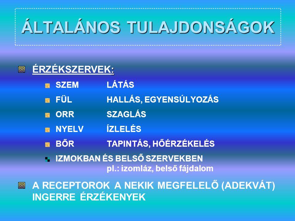 SZEM – LÁTÁSTESZT-2 A SZEMÉSZETEN…