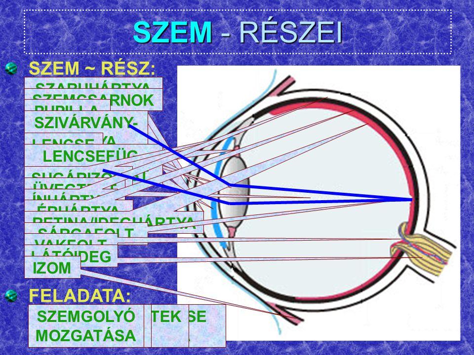 SZEM - RÉSZEI