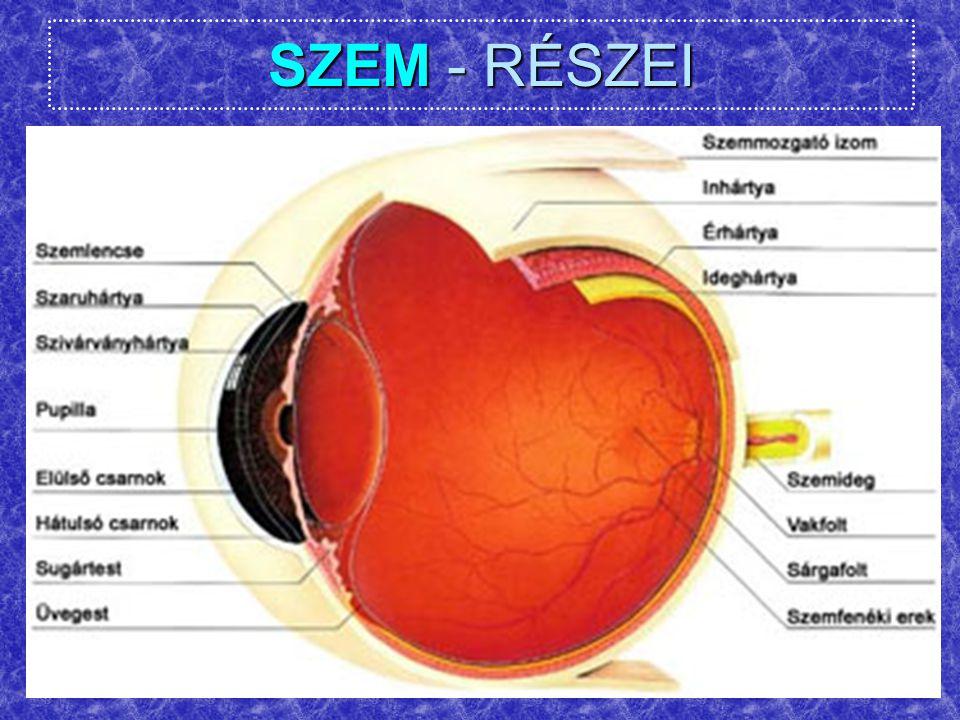 SZEM – LÁTÁSTESZT-4